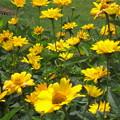 美瑛の花園