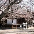 教信寺の本堂前、桜はまだ
