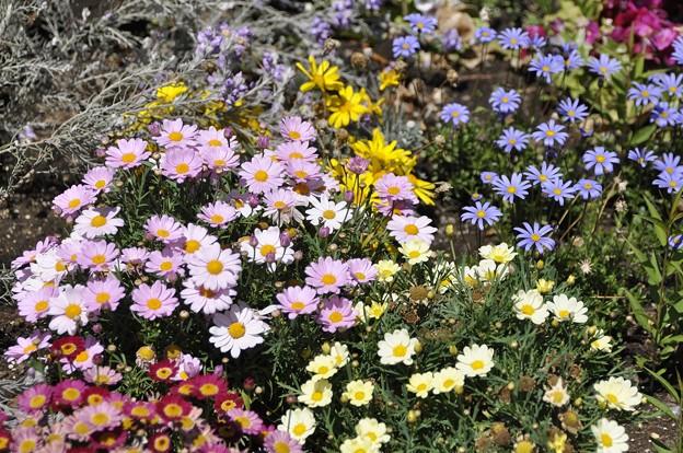ラ・メゾン・マロニエの花壇(2)