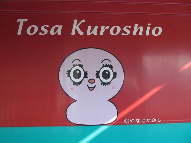 Tosa Kuroshio