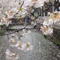 Photos: 春の嵐