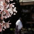桜のある風景_1