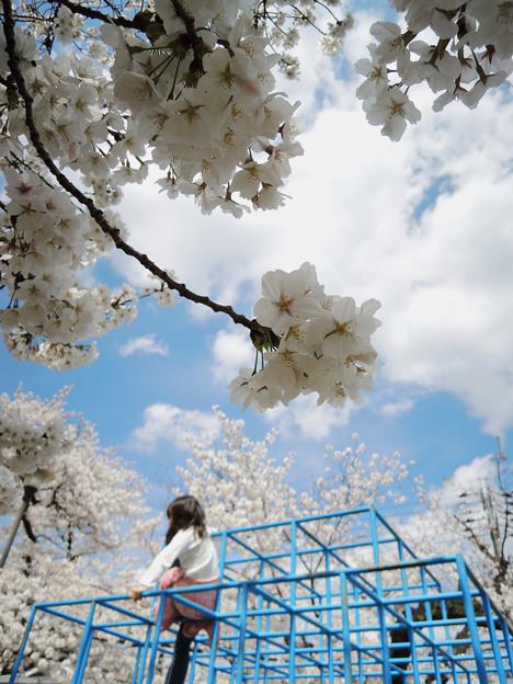 桜のある風景_2