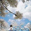 Photos: 桜のある風景_2