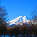冬の林から望んだ富士