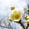 春の白い輝き