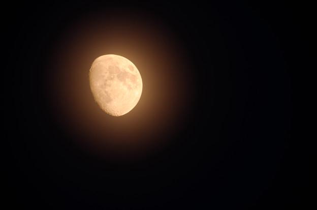 Photos: 妖月。