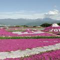 小沢芝桜2013