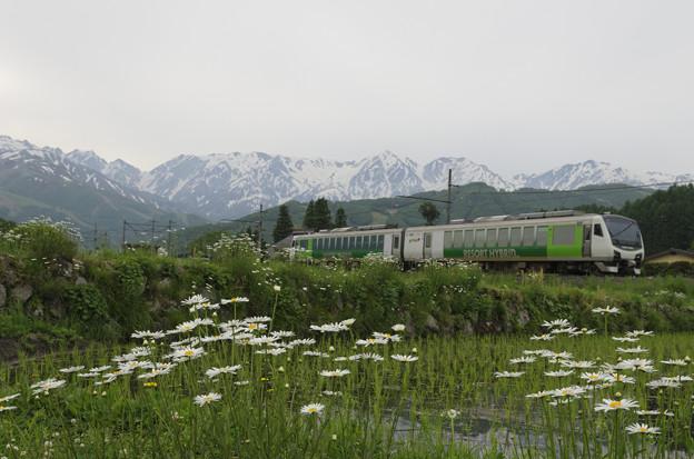 春色の汽車に乗って~♪