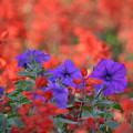 公園に咲いていた花-3-
