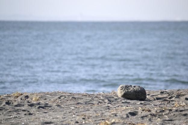 Photos: 海を見つめるぼく