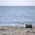 海を見つめるぼく