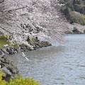平和な上池