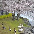 春のめざめ
