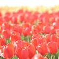 赤く萌える花