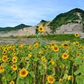 Photos: 花はさく