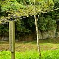 記念植樹の木
