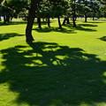 と或る松林の秋日和Holiday