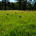 と或る松林のふわふわな芝生Holiday
