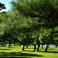 と或る松林の秋日和Holiday -3-