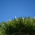 と或る松林と秋の空