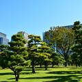 と或る松林の隣にある東京Holiday