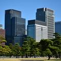 と或る松林は東京のオアシスです。