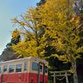 Photos: 里見の大山祇神社