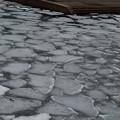 流氷っぽい光景
