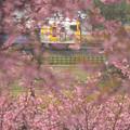 Photos: 雨の桜とE257系500番台