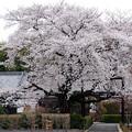 Photos: 国済寺・1