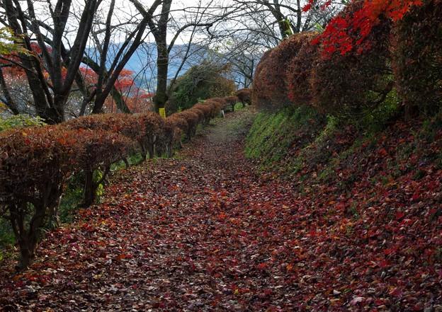 写真: 秋深く