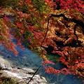 写真: 彩なす紅葉