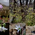 2014/3月 公園の春