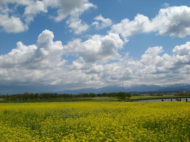 春色の絨毯