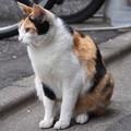 新宿3丁目の猫たち_3