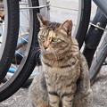 新宿3丁目の猫たち_4