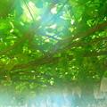 真夏の果実