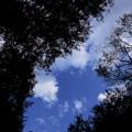 写真: 見上げた空