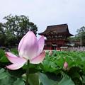 Photos: 伊賀八幡宮