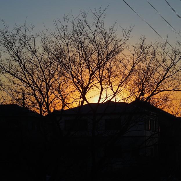 Photos: 枯れ木