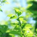 Photos: やさしい緑