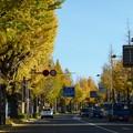 Photos: 1511高尾紅葉2