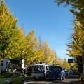 Photos: 1511高尾紅葉3