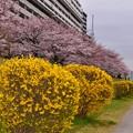 16亀戸中央公園2