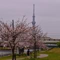 16亀戸中央公園3