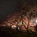16東中野夜桜1
