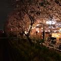 16東中野夜桜2