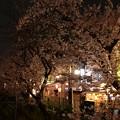 16東中野夜桜3