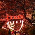 16中野通り夜桜1